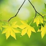Expérience pour enfant : pour découvrir les couleurs cachées des feuilles