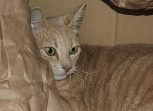 Créer une boite de maternité pour chatte gestante